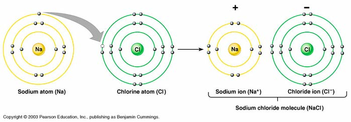 Basic Chemistry: Atoms and Ions