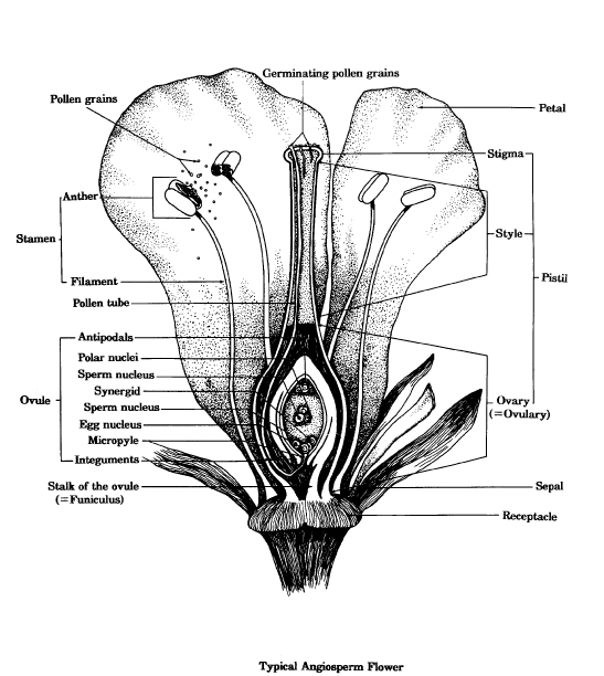 Diagram Of Typical Flower Diy Enthusiasts Wiring Diagrams